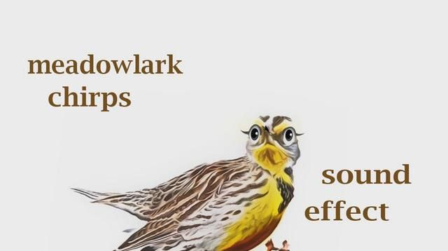 how a meadowlark chirps soundeffect animation