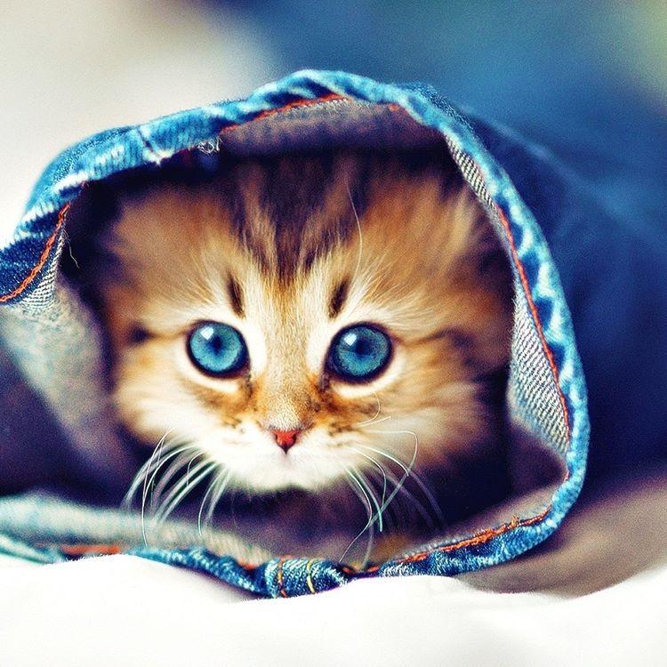 #любимец #животные #друг #pets #питомец #домашниеживотные #красавчик #зверята #зоо #zoo #животные #animals #berd #petstagram #animals #animal #pet #питомцы #nature #cat #котенок