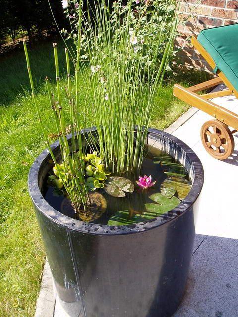 Le mini jardin aquatique con u dans un bac en zinc mini - Bassin pour petit jardin ...