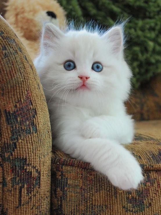 Cute White Kitty Cute Animals Beautiful Cats Pretty Cats