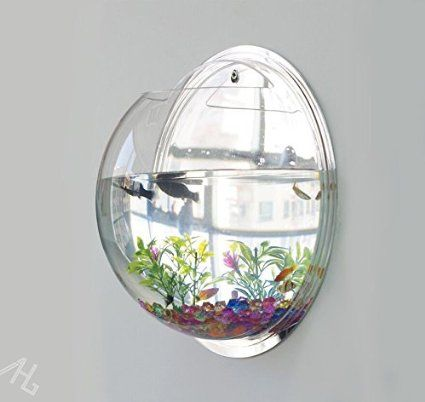 Aquarium ou porte plante mural mural bocal poissons for Petit aquarium boule