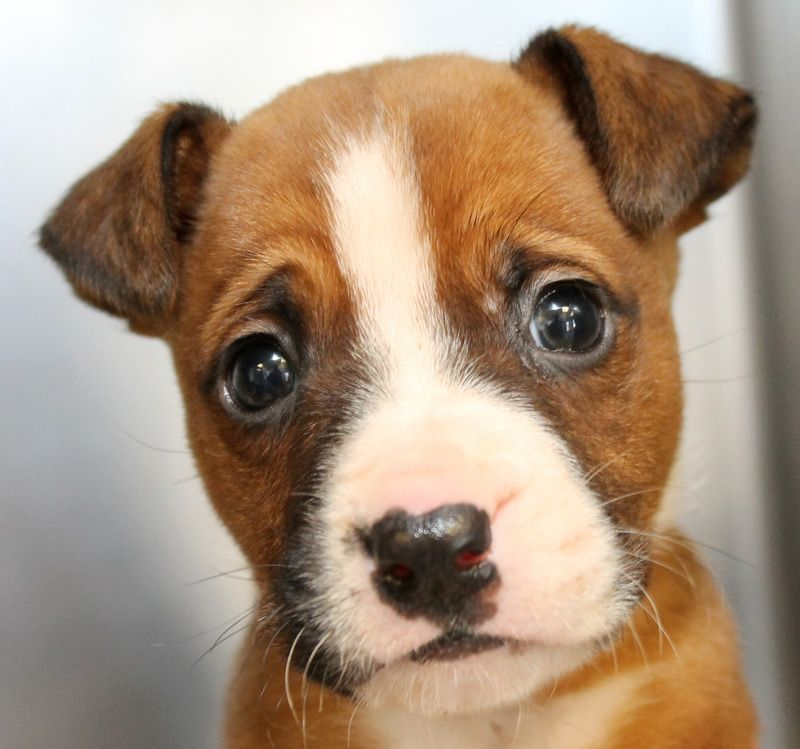 maryland see more dogs amp cats on   sahumane org follow