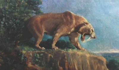 Unexpectedly Awesome Facts About Saber-toothed Tigers   Primary ...