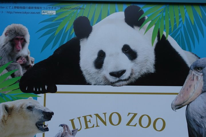 Poster For Ueno Zoo In Tokyo One Of Our Favorite Zoos In The World