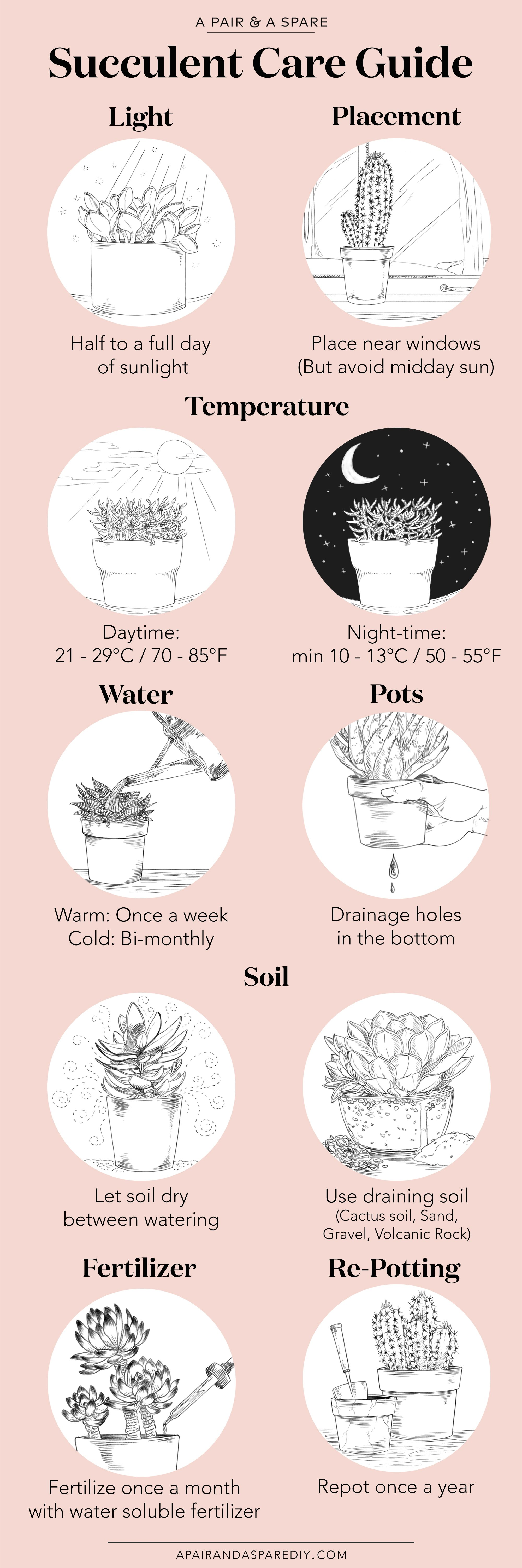 An Illustrated Guide to Caring For Your Succulents   Collective Gen
