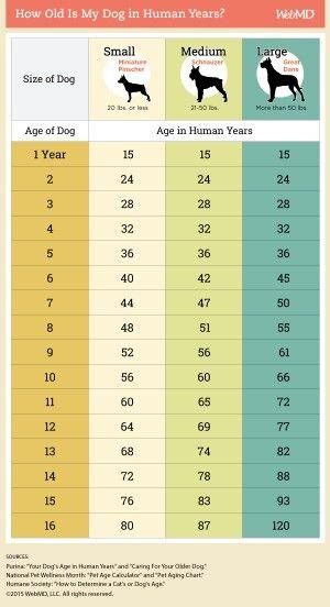 Dog Age Chart Dogs Pinterest Chart Dog And Doggies