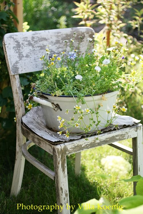 Pot of flowers on the chair