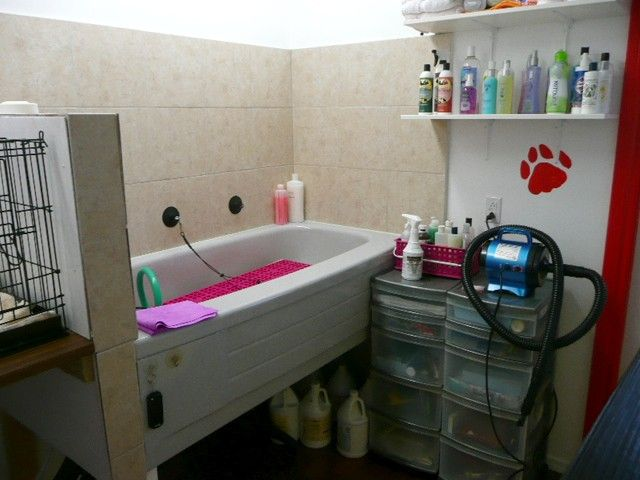 pet grooming for cats and dogs in tweed, ontario, by certified pet ...