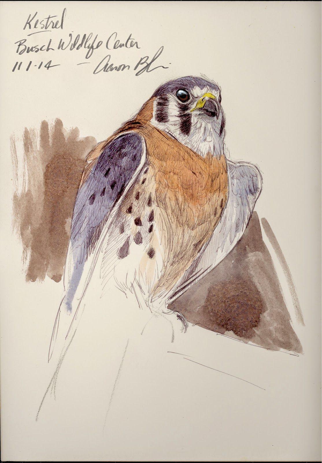 The Art Of Aaron Blaise A Few Bird Of Prey Drawings Done In The Last Few Days Bird Art Bird Drawings Drawings