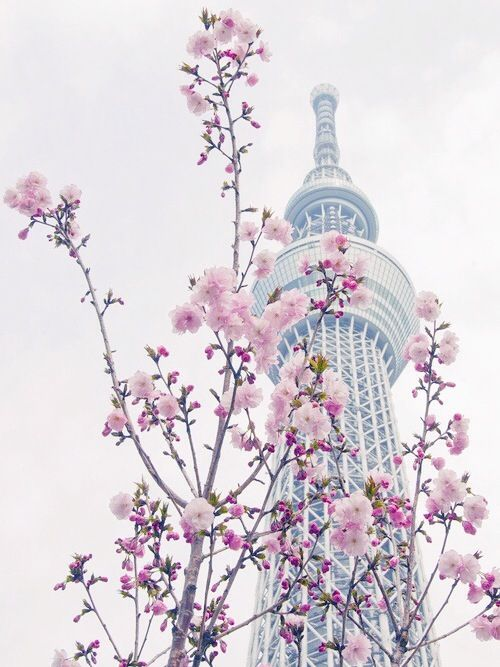Beautiful South Korea Seoul Tower South Korea Seoul Japan South Korea