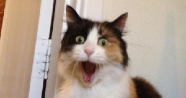 Картинки по запросу Funniest cats in the world