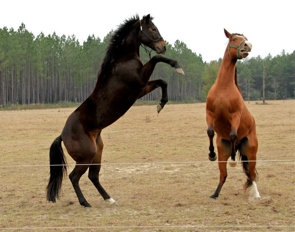 Two of our horses