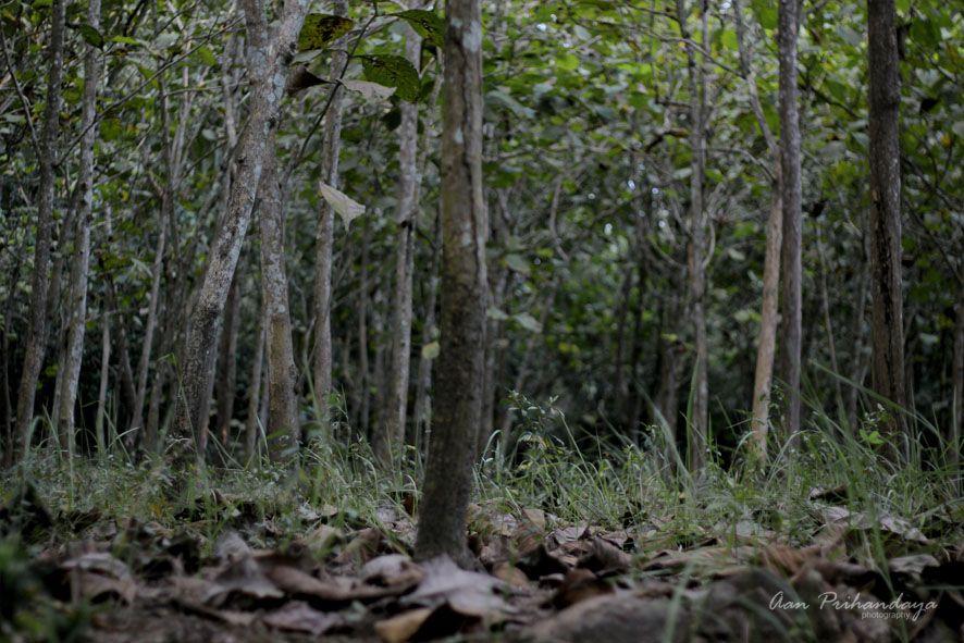 Dikelilingi Hutan Jati Hutan