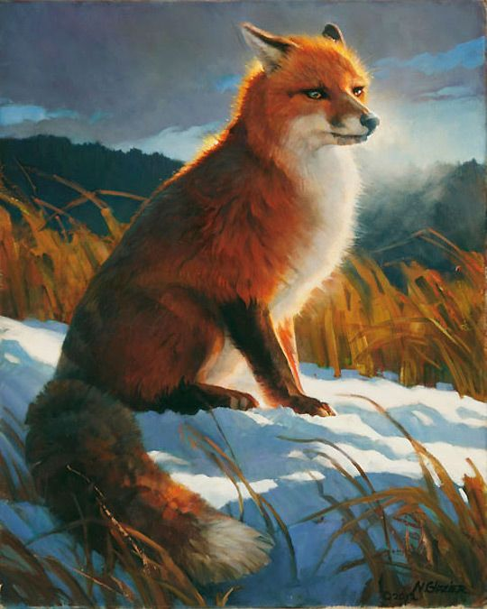 Dazzling Red Fox In Winter By Nancy Glazier On Stand By Pics