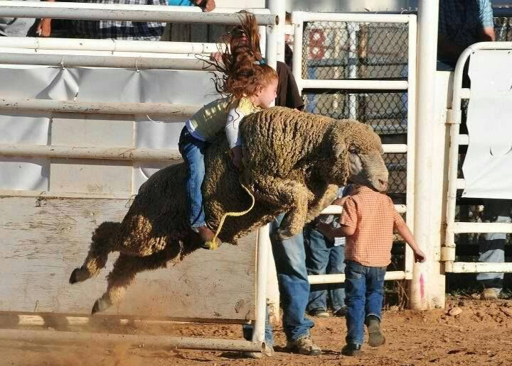 Mutton bustin' - the little girl says this is how you hold on ....like you hold on to Jesus - by C4C