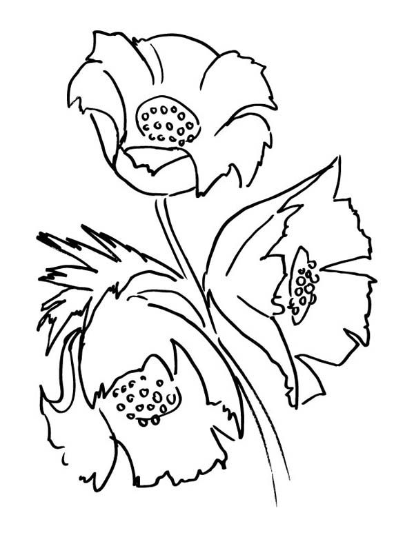 Nice Poppy Coloring Pages 55 Drawing of California Poppy