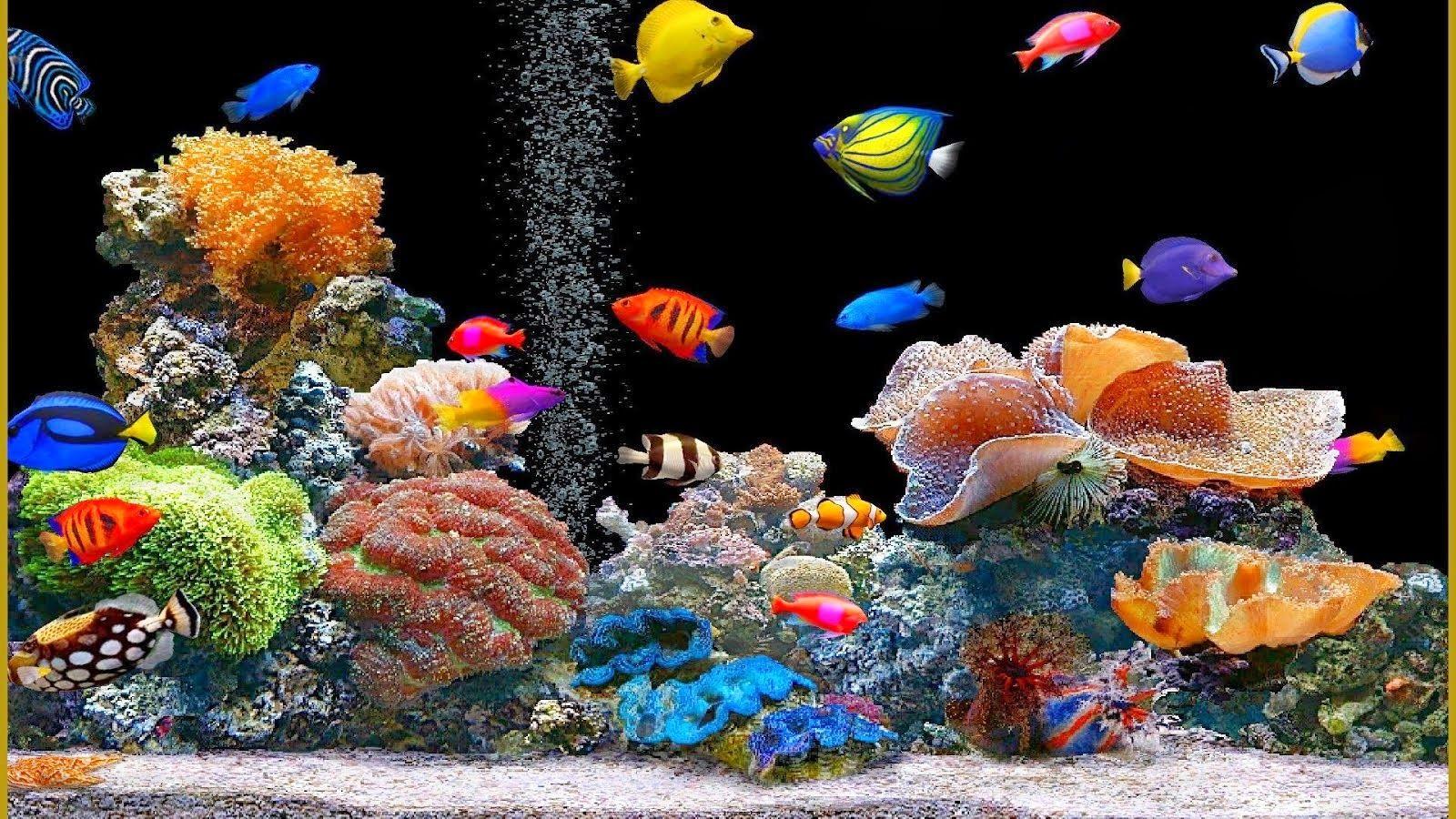 Animated Fish Tank Wallpaper Fish Wallpaper Aquarium Live Wallpaper Saltwater Fish Tanks