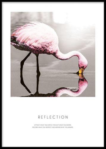 Poster med rosa flamingo. Snygg modern affisch med en rosa flamingo och texten Reflection under bilden. En både snygg och tänkvärd budskapstavla med en vacker bild som passar både ensam eller som del i tavelvägg.
