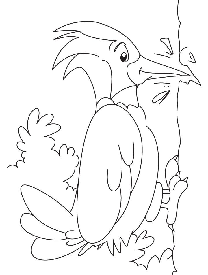 Woodpecker Coloring Pages Preschool And Kindergarten Bird