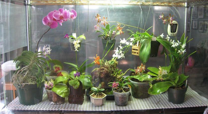 How To Grow Orchids Indoors With Full Spectrum Led Grow Lights Orchid Plant Care Indoor Orchids Growing Orchids