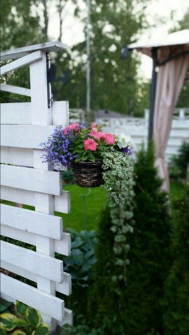 Kesäkukka-amppeli 2014. Hieman sateen murjomia. Summer flowers  in hanging basket.  Hard rain did little damages.