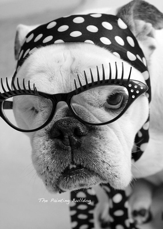 Smart - Glamorous - Black and White Dog Photo - Celebrity Piper Stone The One-eyed English Bulldog - Diva - Cute Glasses Polka Dot Headband