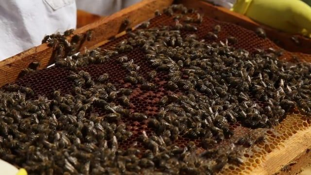 Free video - Honey, Beekeeper, Bees, Production