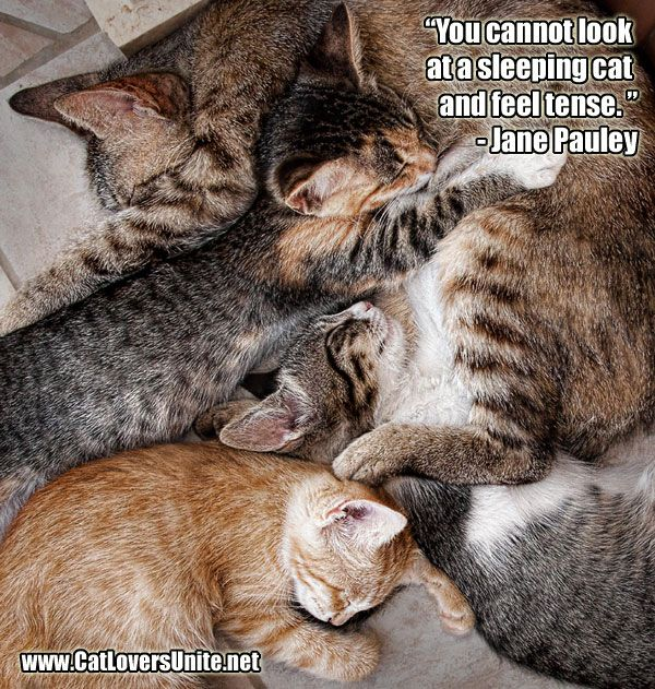 """""""You cannot look at a sleeping cat and feel tense."""" - Jane Pauley  Looking at this photo will surely will relax you!  More at: http://catloversunite.net"""