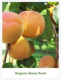 Viva Tierra - Organic Produce