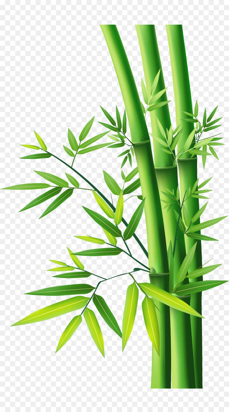 Bamboo - Bamboo Bamboo png download - 1040*1870 - Free Transparent ... png for Free Download | DLPNG