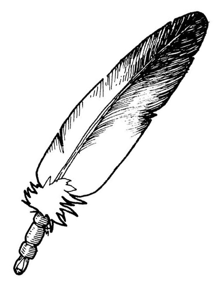 Peacock Feather Coloring Page Feather Is A Body Cover Structure