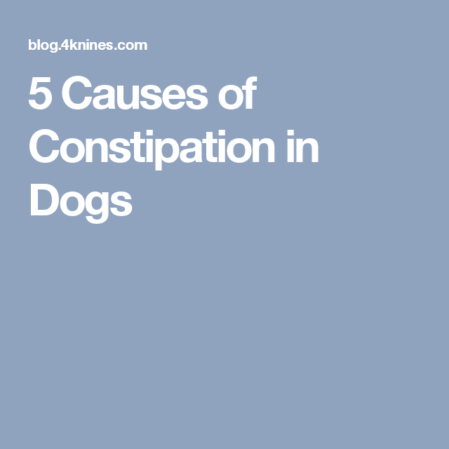 5 Causes of Constipation in Dogs