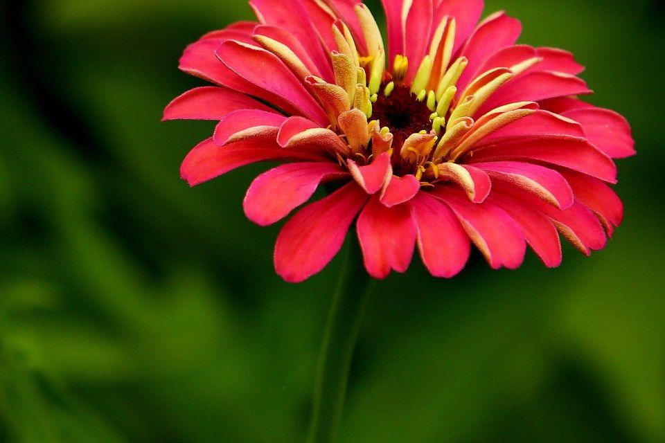 Beautiful Flower Shot Detail Sharp Download Hd Desktop Mobile