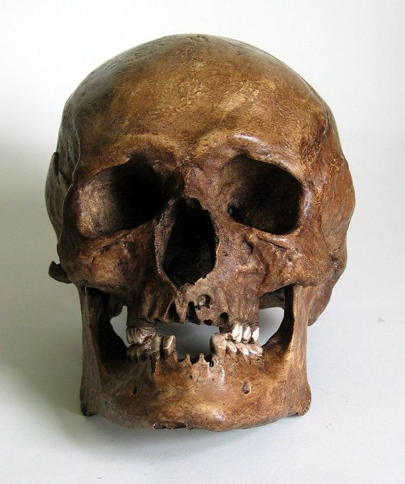 human skull replica on etsy, $88.61 | i want | pinterest | skulls, Skeleton