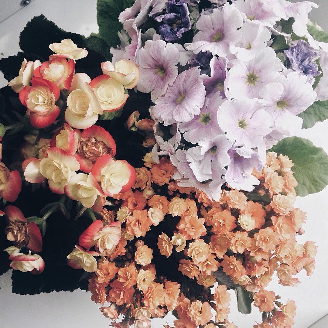 Nem tudo são flores.