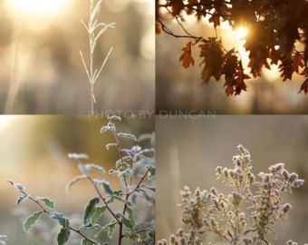 """Frosty Country Morning 4 Print Set 8"""" x 8"""""""