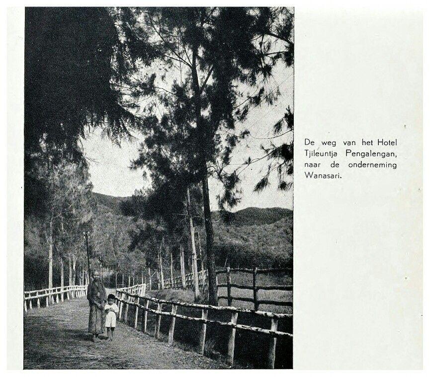 Kebun Teh Riung Gunung Bandung Jawa Barat