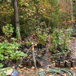 How To Start A Backyard Nursery And Make Money Off Your Plants Ideas For A Big Or Small