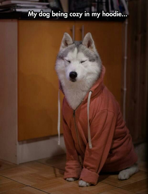 50c203da504 If I ever get a big dog I'll let em' wrap up in my hoodie for as long as  they want