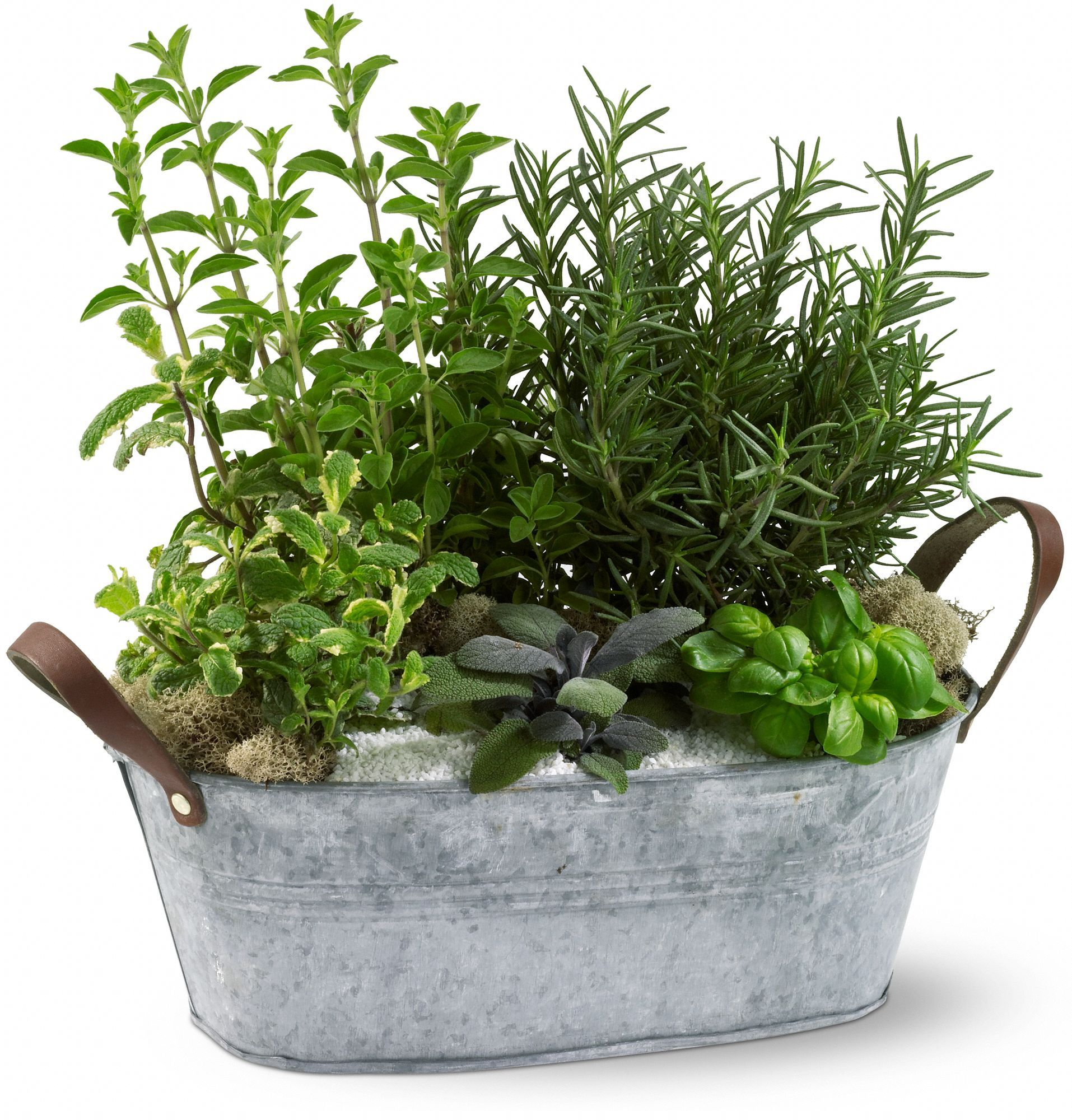Order Herb Garden Plant From Edelweiss Flower Boutique, Your Local