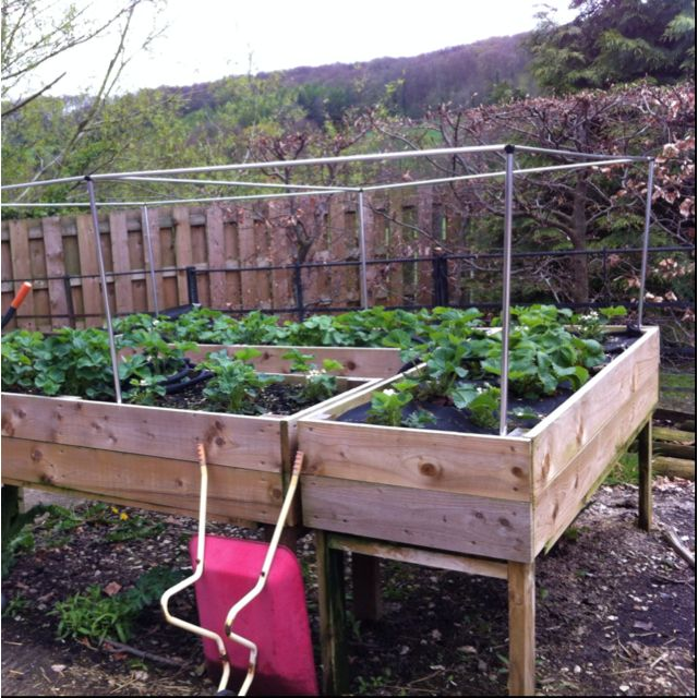 Raised Strawberry Bed, Ready For Netting.