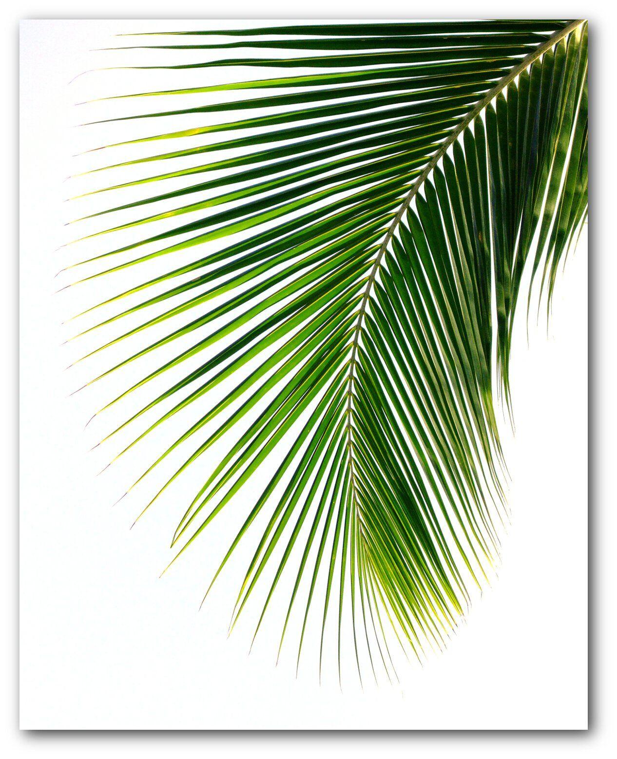 Monstera banana palm leaf prints tropical palm leaves