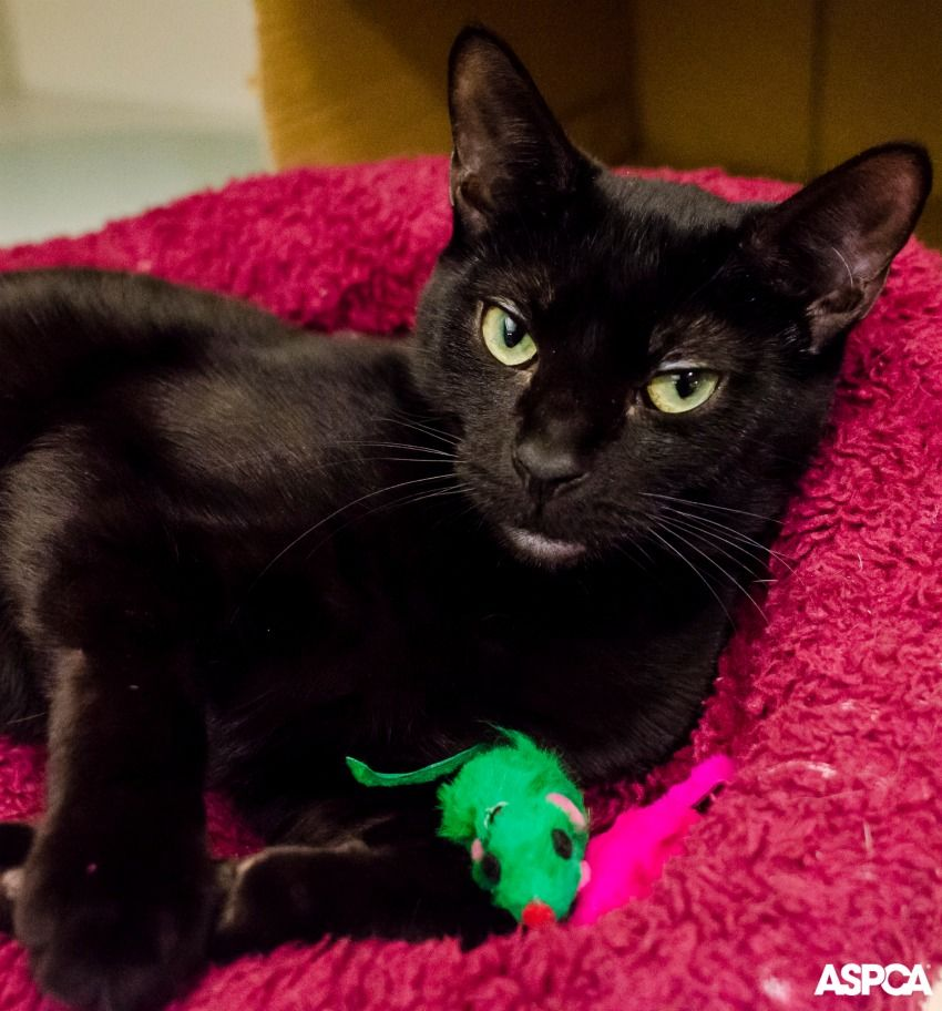 Princess is a sweet and laid-back cat who likes rest and relaxation. This shy beauty prefers to take things slow and may need some time to warm up to you at first. With some yummy treats and her favorite toys, she'll adjust to her new home in no time.