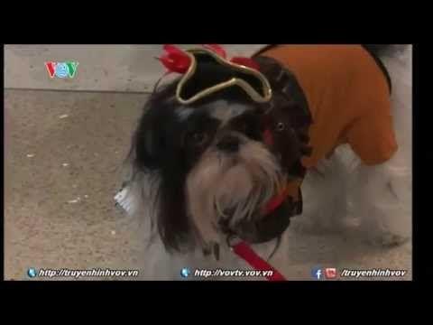 Cún cưng đem không khí Halloween đến cho hành khách ở sân bay