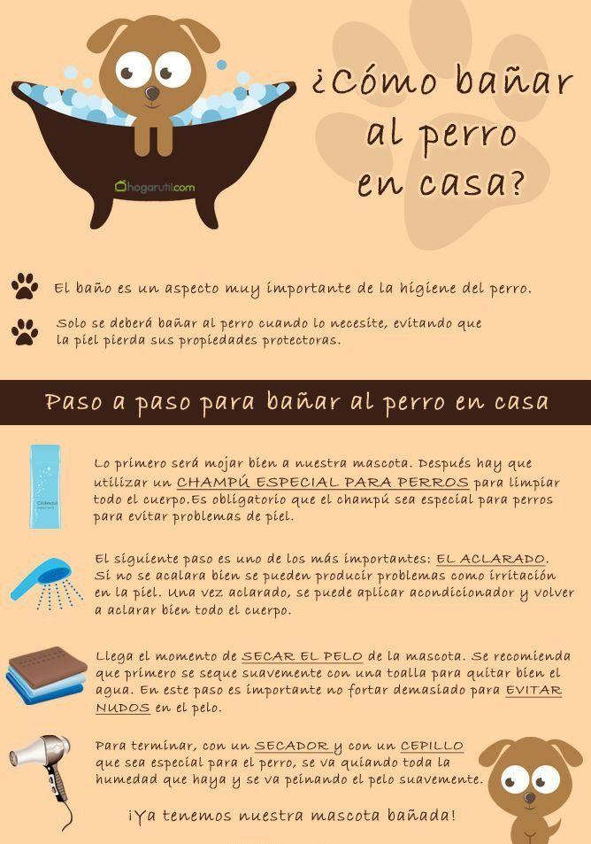 Bao para perros  normal  Pinterest  Bao Mascotas y