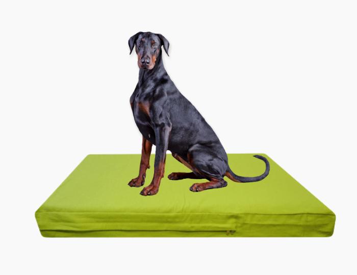 Dog Chew Proof Rugs Taraba Home Review