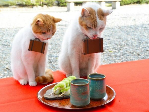 En Japón, Gatos adorables que se utilizan para promover turismo - DesignTAXI.com