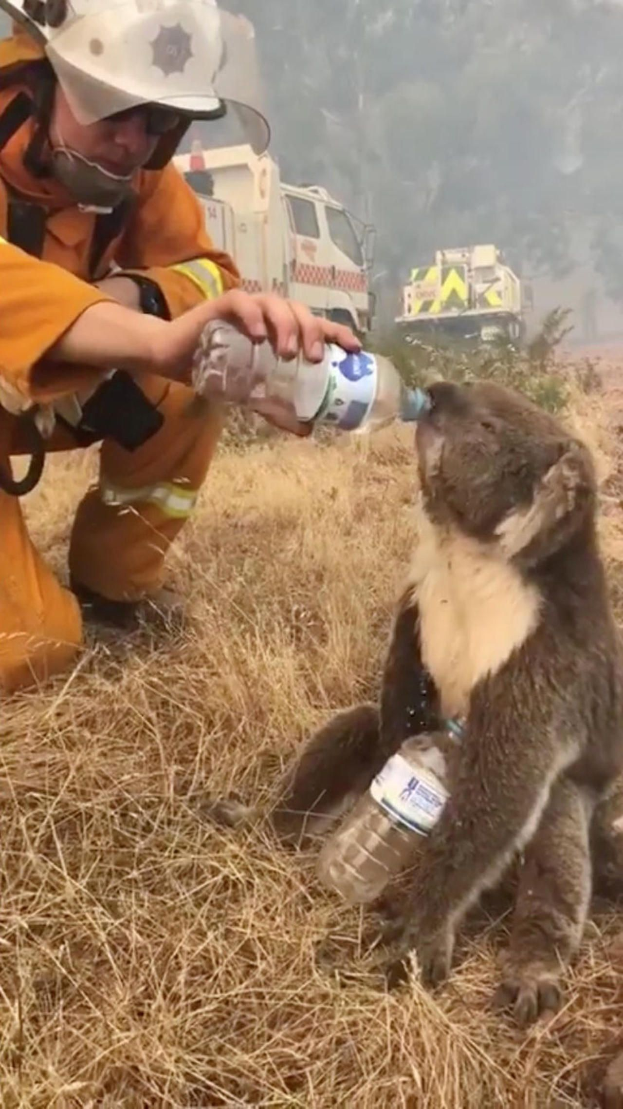 Australia Fires Pictures From The Deadly Wildfires In 2020 Koala Animals Koala Bear