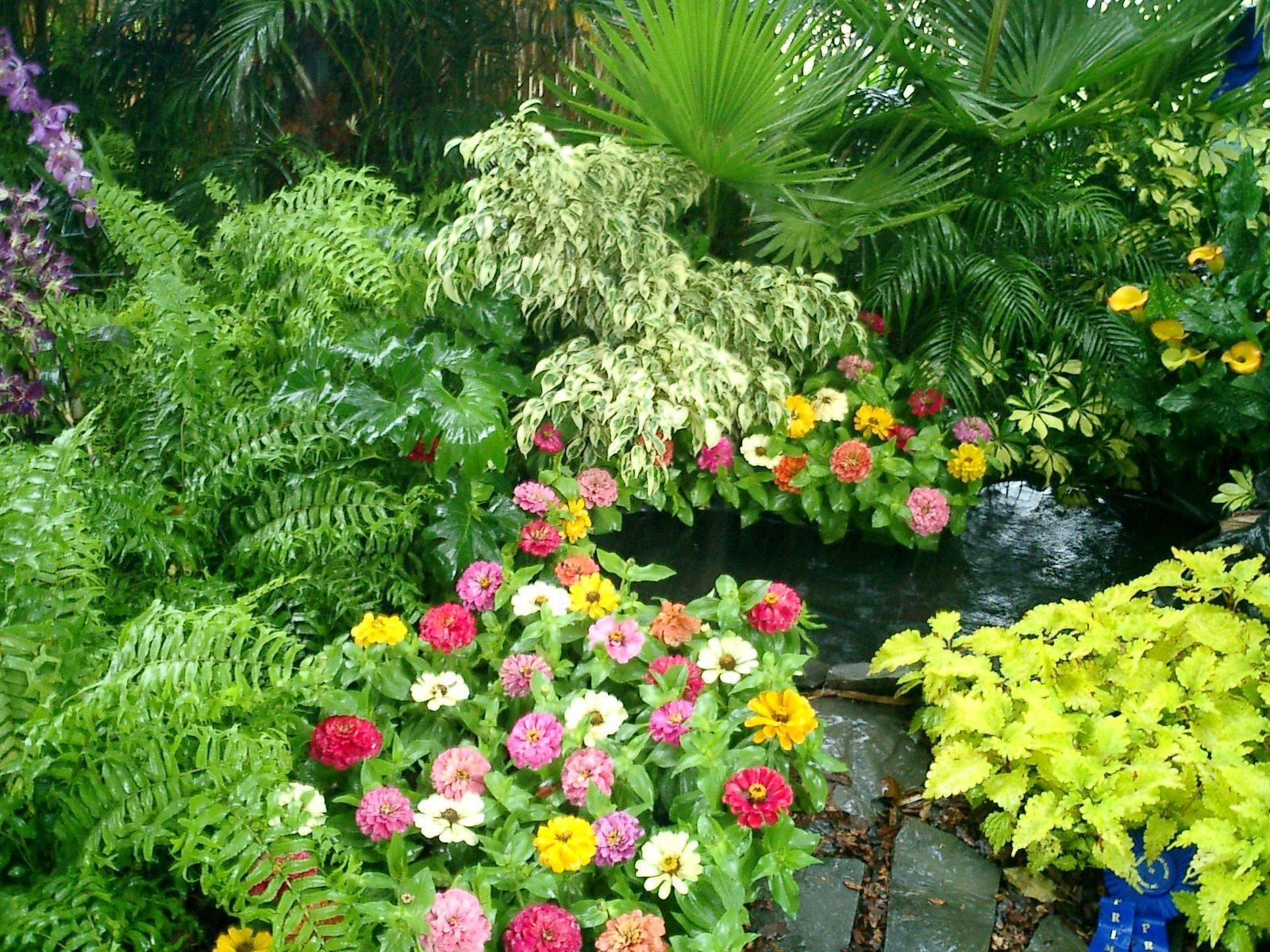 Resultado de imagen para plantas tropicales para jardin
