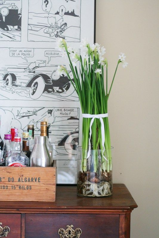 Paperwhites In Glass Vase To See Roots Winter Pinterest